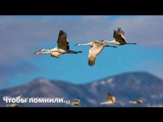 Родина Мама - Алексей Хворостян