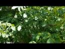 Луганск-фруктовый сад!
