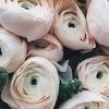 """Цветы """"Floral nook"""" Луховицы"""