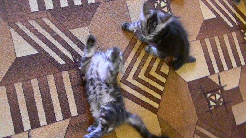 Себастьян и Сэммюэль ..игры по-взрослому... (6)