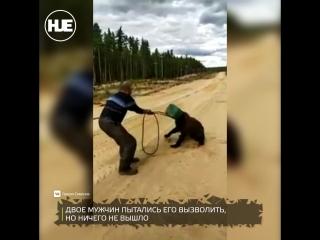 В Якутии медведь застрял головой в канистре