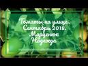 Томаты на улице Сентябрь Марценюк Надежда