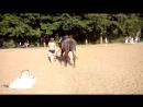 Жеребец на Царскосельском пляже