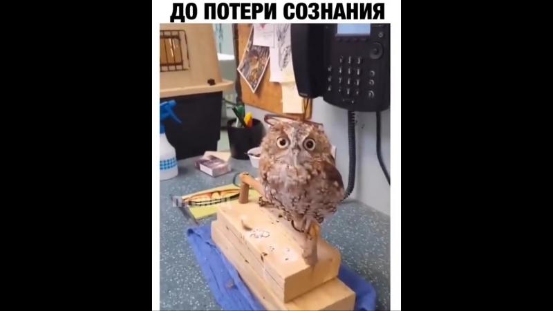 Массаж до потери сознания)