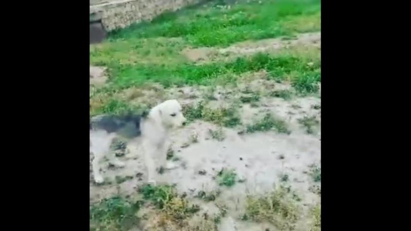 из-за любви к Месси назвал собаку в честь его