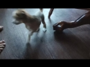 щенки мочат корки