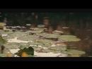 Afruz guruhi - Shalola - Афруз гурухи - Шалола.mp4