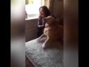 Собака встретилась с хозяйкой после 7 месяцев разлуки
