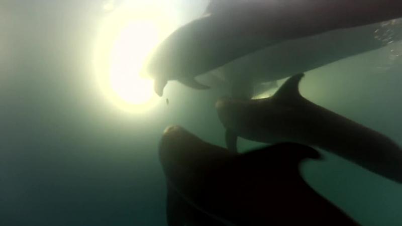 Традиционное рождение Дельфинов в Одесском дельфинарии - НЕМО ...