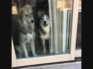 2 типа собак