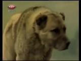 efsane mircey - Saf Kangal Tanıtım