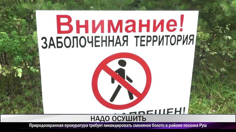 Природоохранная прокуратура требует ликвидировать смоляное болото в районе поселка Руш