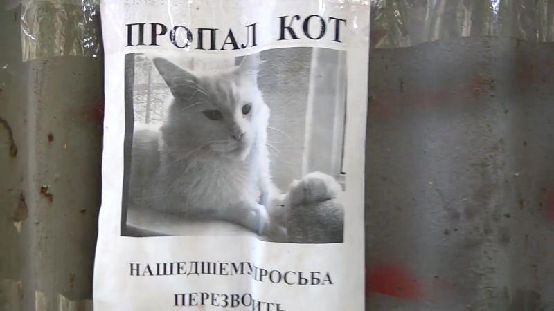 Creeped out when this 'Missing cat' poster turned his head as I walked by