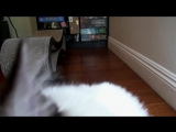 ASMR (VHS Video)