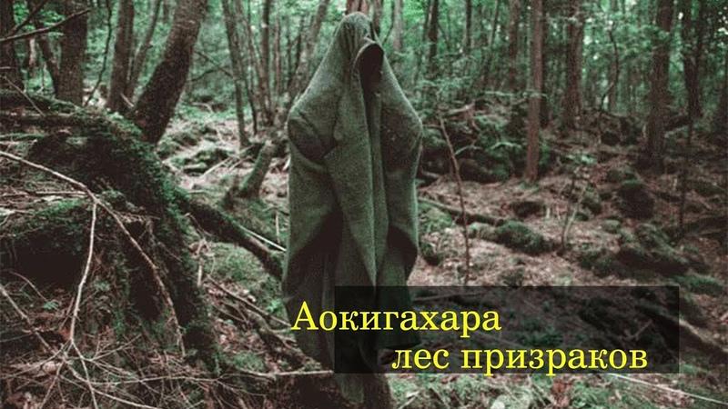 Страшные сказки: лес призраков Аокигахара.