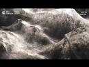 Побережье греческого города окутало густой паутиной
