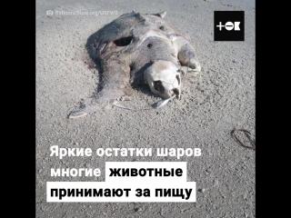 Воздушные шары убивают животных