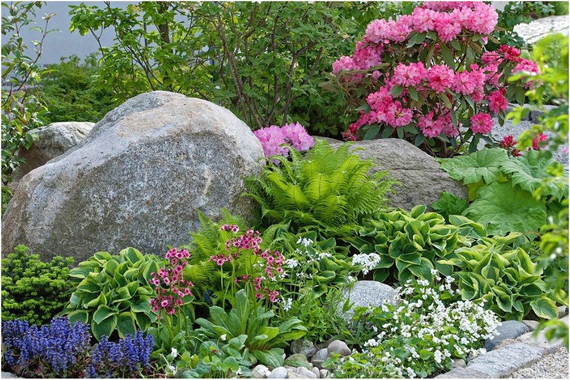 Рододендроны в саду, с чем сажать рододендрон: на альпийской горке