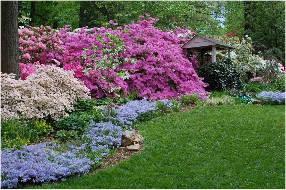 Рододендроны в саду, с чем сажать рододендрон: миксбордер