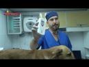 Первую стерилизацию бездомных собак провели в Северодонецке.