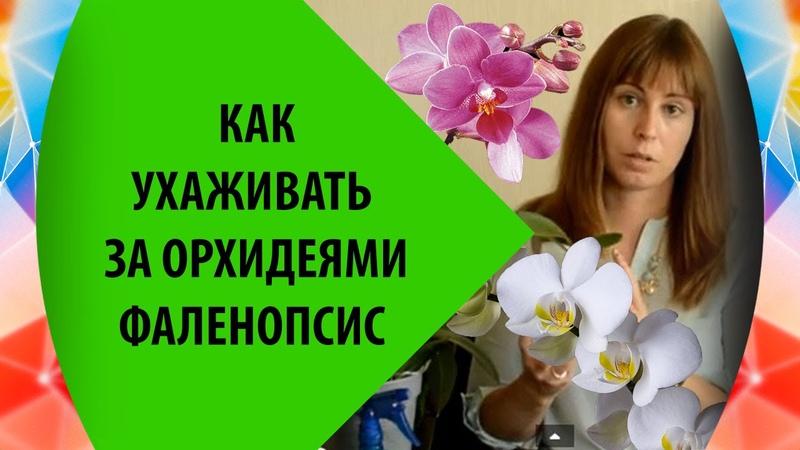🌸Орхидея Как Ухаживать За Орхидеей Фаленопсис 🌸 Успешный Опыт🌸 Орхидея Уход