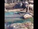 Слон и гусь