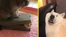ПОПРОБУЙ НЕ ЗАСМЕЯТЬСЯ Смешные Приколы и фейлы с Животными до слез, смешные коты