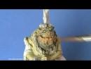 Miniature Mentor 4 - The Raskhal. Master Class Allan Carrasco. Part 1