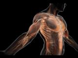 BBC_ 01 The Human Body. Life Story _ Тело человека. История жизни