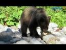 Курильчанин около часа провел в реке спасаясь от медведя mp4
