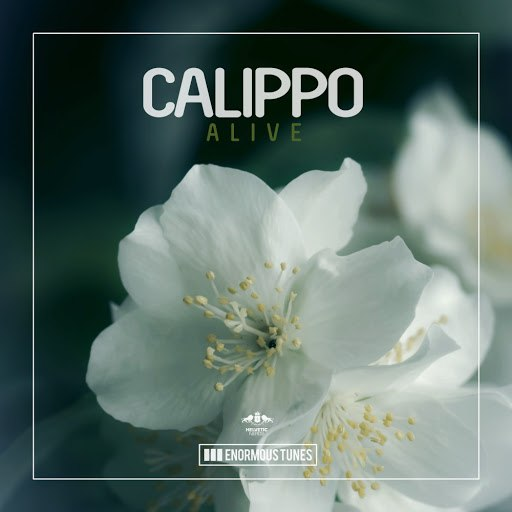 Calippo альбом Alive