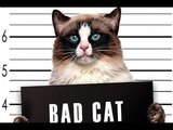 funny.animals.clips bad cats TOP 2018 плохие котики