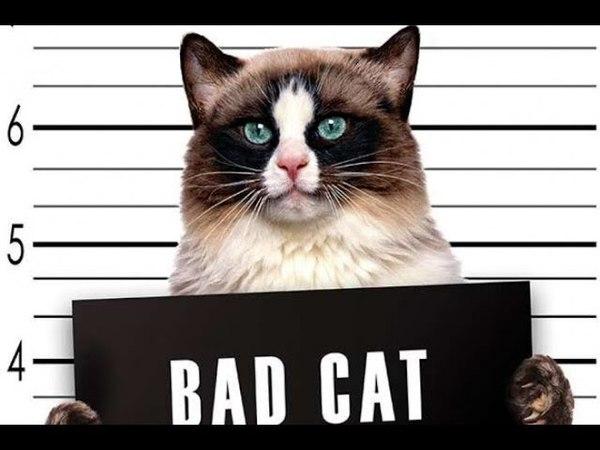 Funny.animals.clips • bad cats TOP 2018 плохие котики