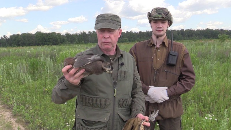 Подготовка дратхаара к охоте