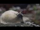 BBC Застывшая планета 2 Весна Научно познавательный природа 2011
