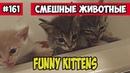 Забавные котики. Смешные животные, Funny vines подборка 161.