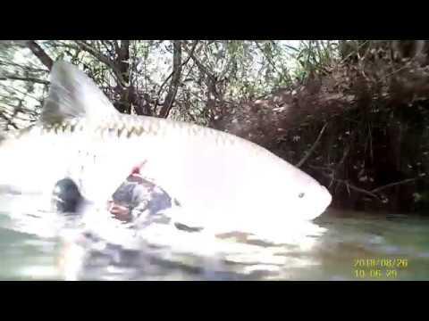 Подводная охота на ГолавляОтчет 2018 годСмоленские реки