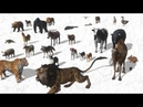 Names of farm animals, wild animals with ANIMAL SOUNDS