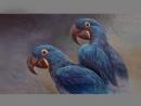 От яйца до первого полета Гиацинтовый ара