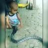 Малыш играл с ядовитой коброй, пока взрослые снимали это на видео и умилялись - ...