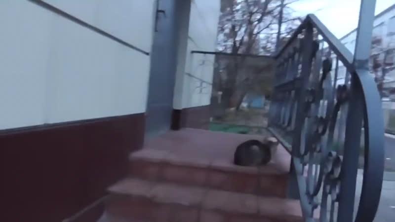 я испугал кошку