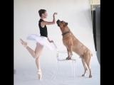 Собаки и балерины.