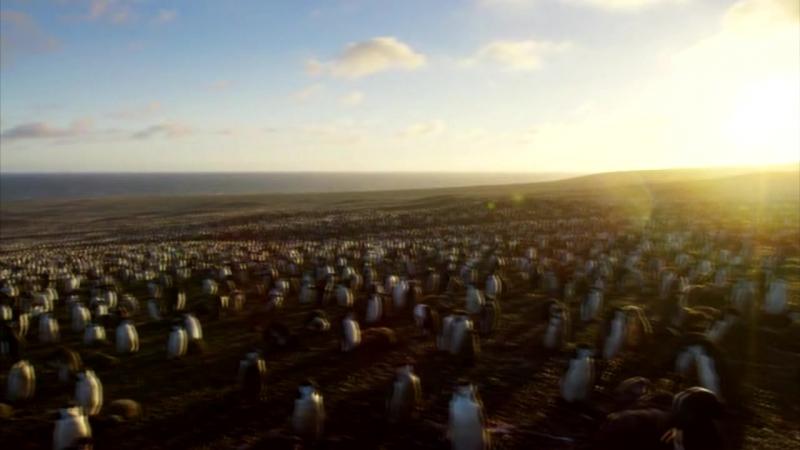 Planet Earth 2\Планета Земля 2 .Серия 1.Острова.Пингвины