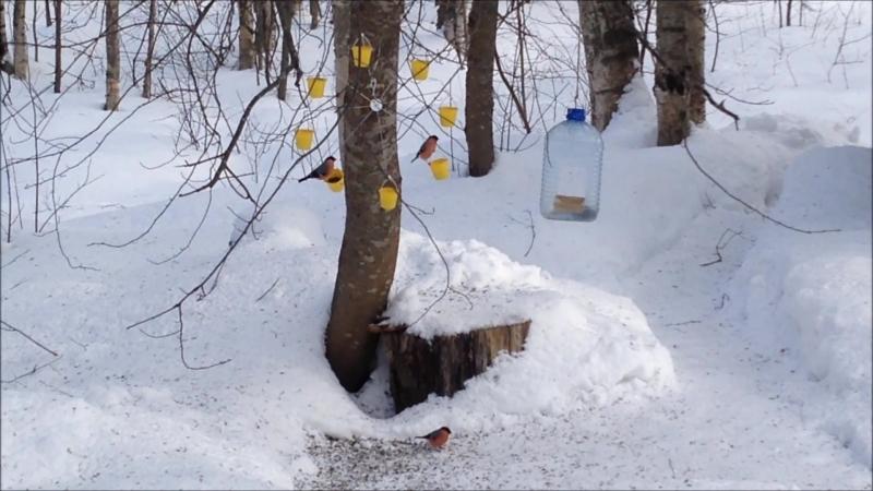 Лесные птицы (снегири, синицы, свиристели). Вращающаяся кормушка.