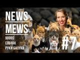 News Mews #7. Руки-базуки, 9000$, Собчак