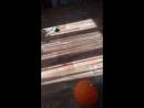 Венди и шарик