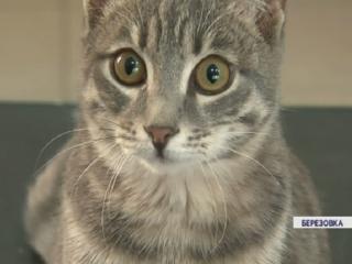 В Березовке ветврачи поголовно вакцинируют домашних животных от бешенства