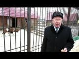 Новогоднее поздравление от директора Саранского зоопарка Павла Кшняйкина