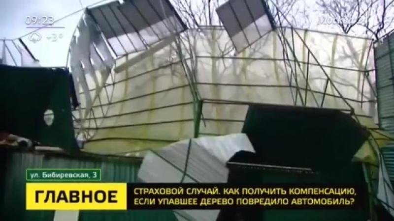 Сотни машин повреждены упавшими деревьями во время шторма в столице - Москва 24