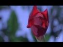 Video-5a2bae217f519dc919dd036e71930838-V.mp4
